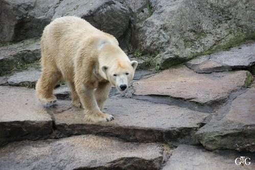 Berliner Zoo 22.02.201510