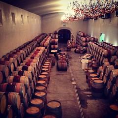 É só vinho 🍷😃👍 #vinho #wine #southafrica #stellenbosch #asara  #bpesa