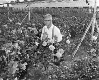 06-13-1960_17309A Rozenkweker Verbeek
