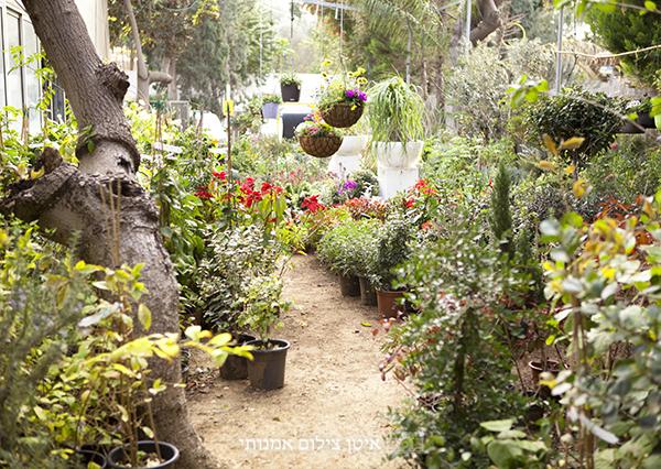 nursery in israel, flower nursery, משתלת הגן הקסום רשפון, משתלה, צילומי אופנה, צילומי הריון