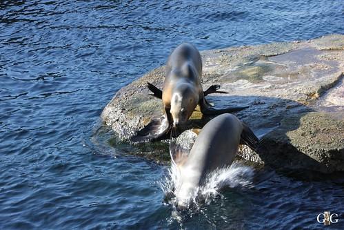 Zoo am Meer Bremerhaven 08.03.201525