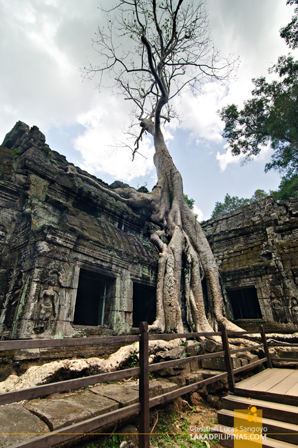 Ta Prohm Temple Trees in Siem Reap