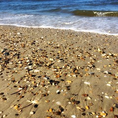 I spend so much time walking the shores and collecting beautiful shells, rocks and sea glass.