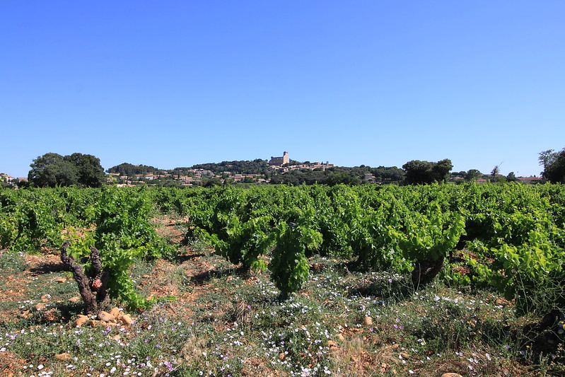 provence village chateauneuf du pape  vineyards