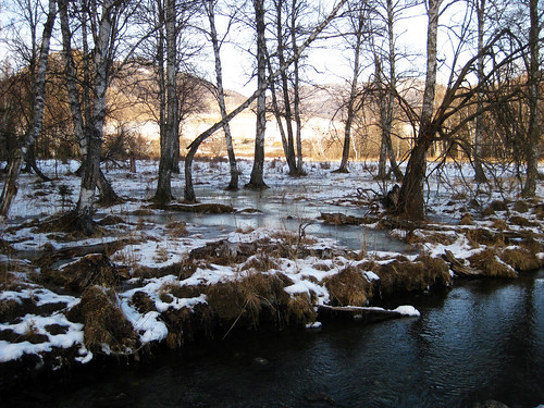 altai forest winter ice river scape siberia canon landscape waterscape riverbank outdoor amateur canonixus ixy ixus brumal hibernal wintry winterish chill icy cold frozen 1000v40f 500v20f floral branchlet tree arbor wood dendro salient
