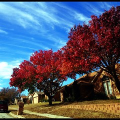 The leaves on trees in North Texas don't change in the ways they do in other parts of the country. So when they do change, I take notice.
