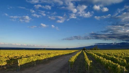 Wine Tech: la tecnología llega al viñedo para hacer mejores vinos