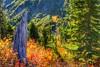 Hiking around Mount Rainier