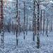 Talv algas lumega