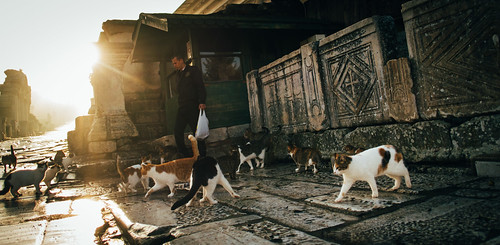 travel portrait cats sunrise turkey fuji lovely selcuk ephesus documentaryphotography xpro1 fujixpro1 xf35mmf14