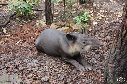 Zoo Karibikinsel Belize 19.11.2014 17