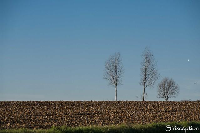 sirixception - 3 trees