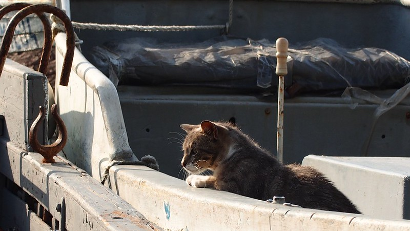 Cats of Balaklava