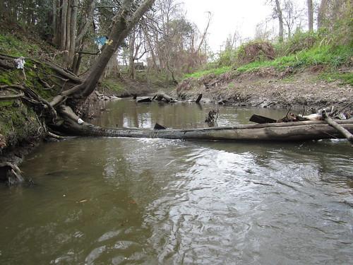 Dam: that log.
