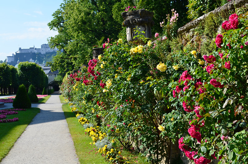 Flower hedge and tunnel, Mirabell Gardens, Salzburg, Austria
