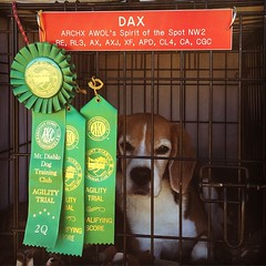 It's confirmed... DAX GOT HIS FIRST DOUBLE Q!!! I am so proud of my Impossible Dog!! I never thought he could get a MACH, but he constantly surprises me and shows me he can do!! Love him!! :heart:️:tada::heart:️