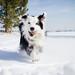 Snow Dog by Anda74