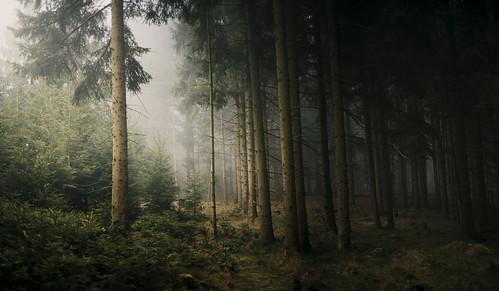 wood trees mist nature fog forest woodland landscape austria landscapes haze woods photomerge landschaft oberösterreich upperaustria landscapephotography böhmerwald bohemianforest dxofilmpack desomnis