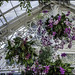 ORCHID SHOW, ORCHID CHANDELIERS, I by susies.genii