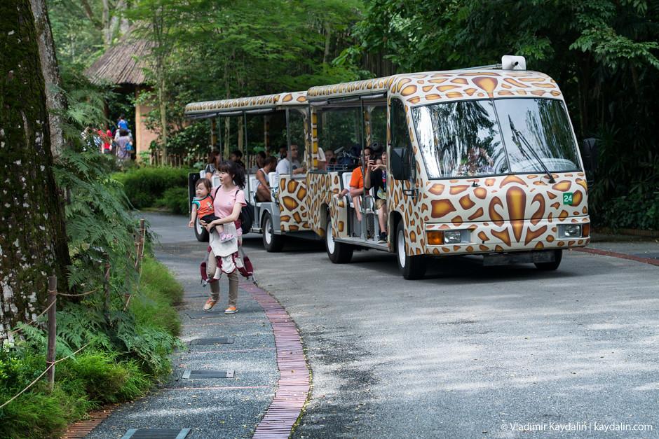 вагончик в сингапурском зоопарке