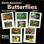 Free Butterflies Flash Cards (set 2)