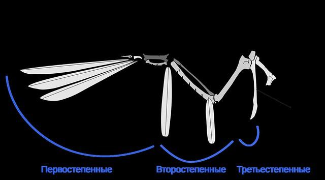 2000px-Birdwing_Ru.svg