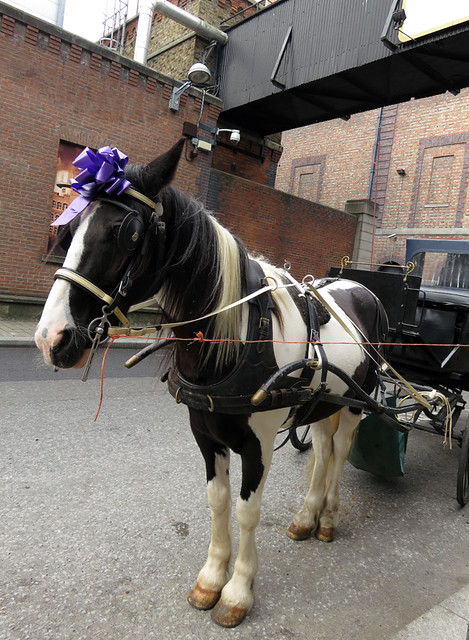 A horse-drawn carriage waits outside of the Guinness Storehouse at St. James's Gate Brewery in Dublin, Ireland