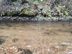 Barlow Creek