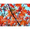 🍁🍁 #Hellonovember 🍁🍁