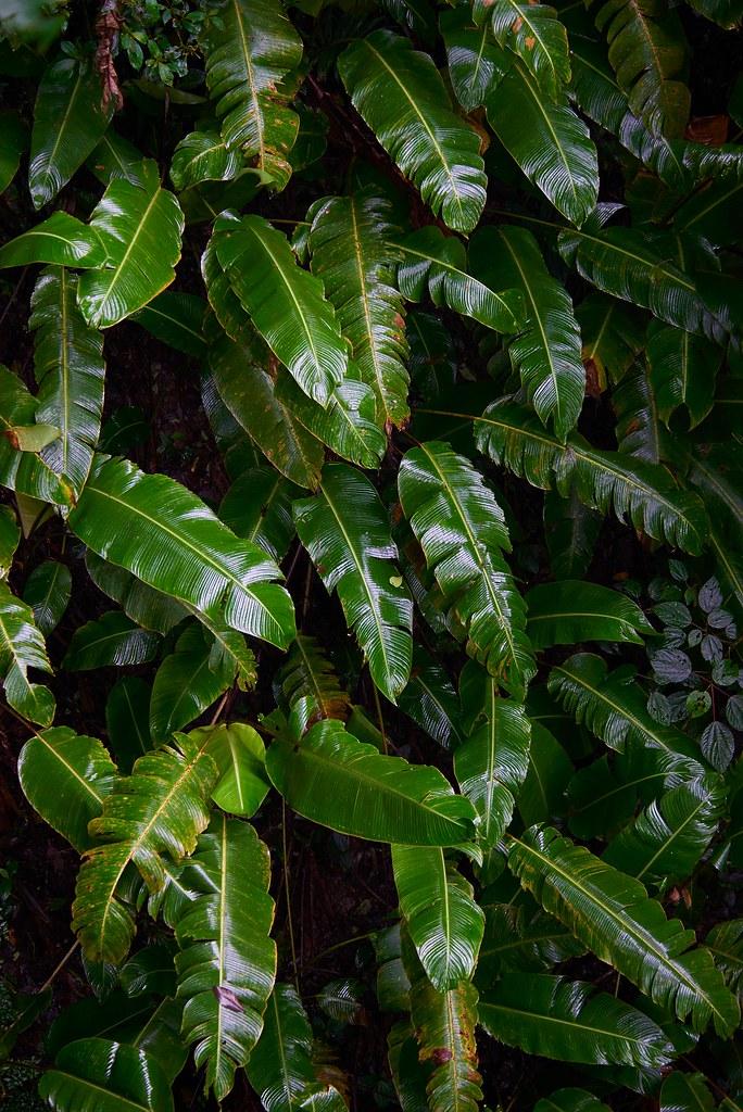 Green - Monteverde