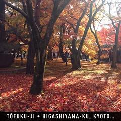 #โทฟุคุจิ #travelprothai #instaplaceapp #place #earth #world  #ทราเวิลโปร #travelprothai #japan #JP #higashiyamaku,kyoto #tōfukuji #street #day