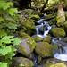 Oregon by Mike Keller Photo