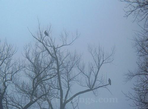 eagles2