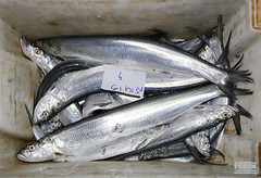 animal, fish, fish, pacific saury, sauries, oily fish, milkfish,