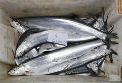 mackerel(0.0), tuna(0.0), cod(0.0), forage fish(0.0), bonito(0.0), barramundi(0.0), sardine(0.0), animal(1.0), fish(1.0), fish(1.0), pacific saury(1.0), sauries(1.0), oily fish(1.0), milkfish(1.0),