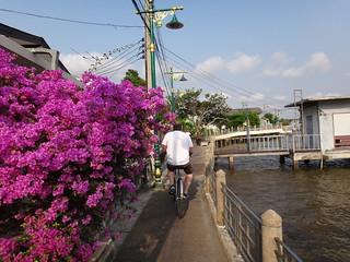Colorful Bangkok tree