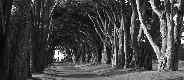 ScottHampton - Swooping Cypress