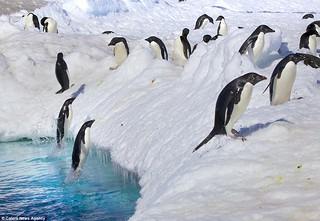 penguin-jump004