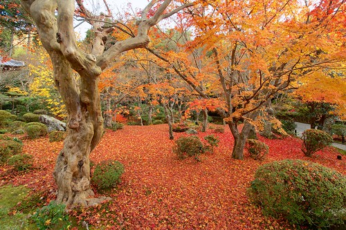 japan kyoto 京都 日本 紅葉 圓光寺