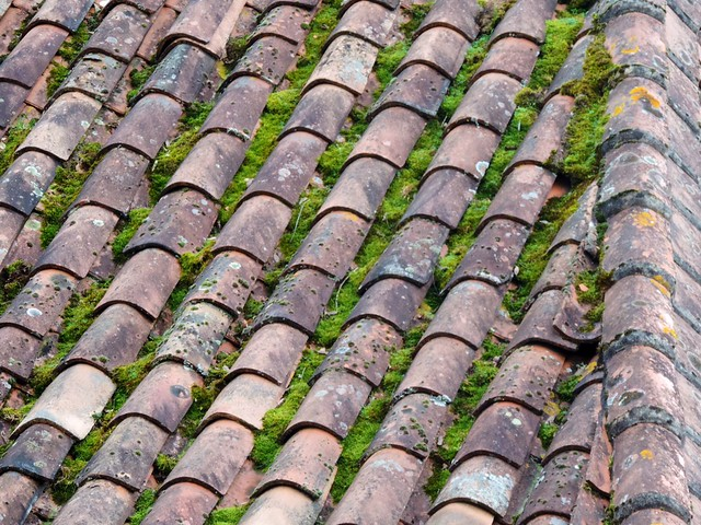 Tiles and moss