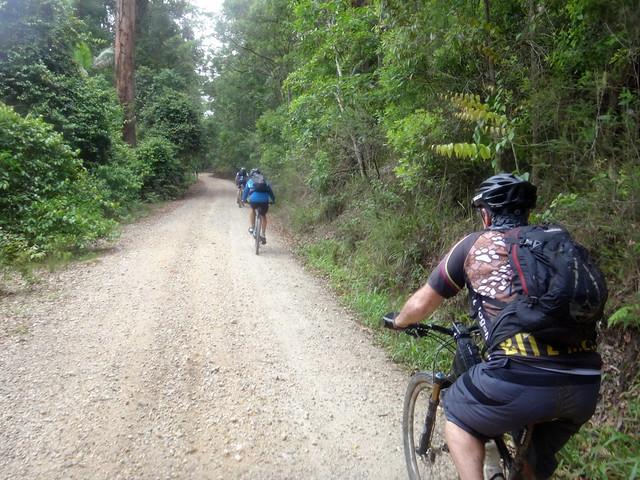 Mebbin Forest Road
