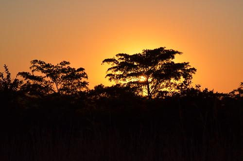 africa sunrise southafrica afrika sonnenaufgang südafrika krugernationalpark mpumalanga krugerpark kruger h11 krügernationalpark krüger sunrisedrive skukuzaroad roadh11eastofpretoriuskop pretoriuskopskukuzaroad