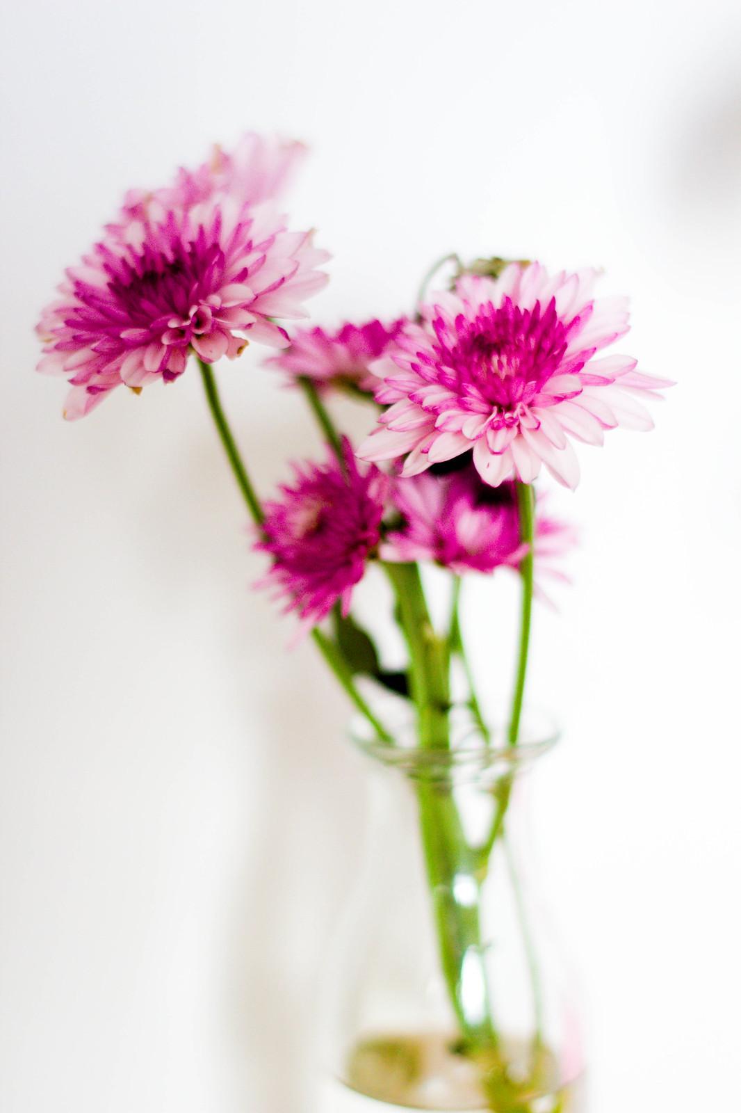 FlowerExperiment-Day3-IMG_2727