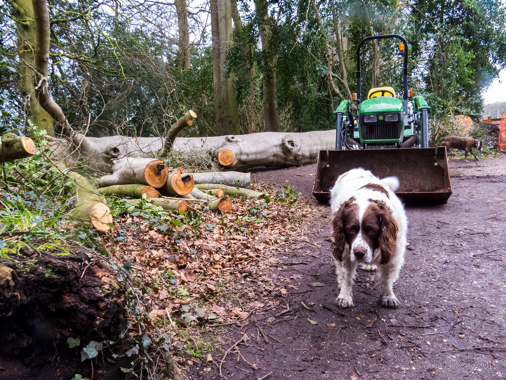 Work has started to remove some of the fallen tree