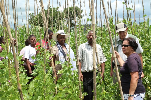 Irmgard Hoeschle-Zeledon (right), Jim Ellis-Jones (second right), Regis Chikowo (center) and Colletah Chitsike (center left) view a mother trial for climbing bean varieties in Linthipe, Malawi. Jim and Colletah were part of the team of 3 reviewers (Photo