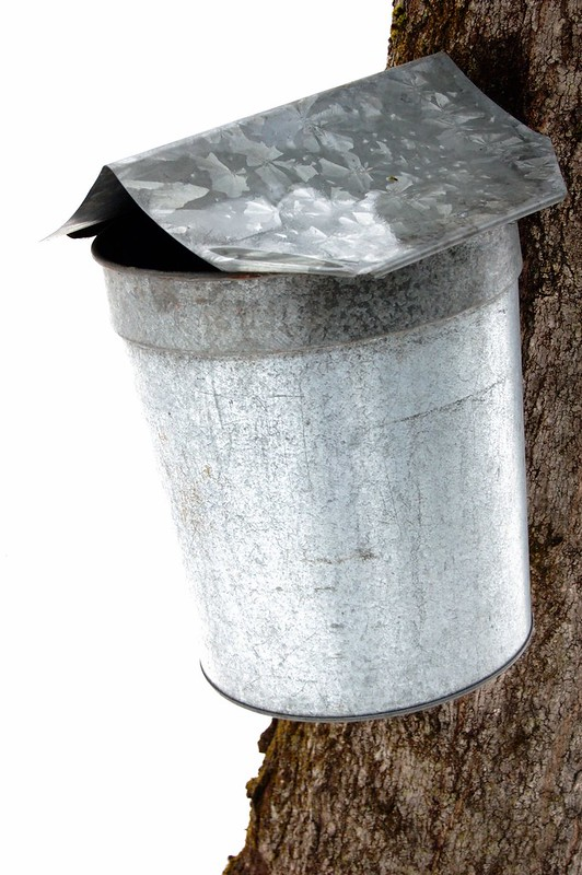 Bucket for maple sugaring by Eve Fox, The Garden of Eating, copyright 2015
