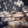 Leaf-strewn steps, 8/2/16