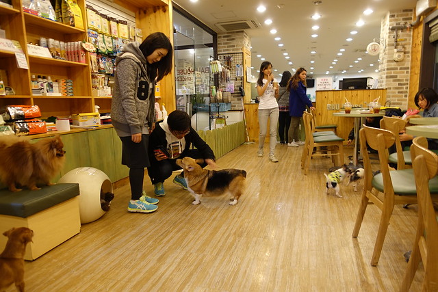 Bau House Dog Cafe - Seoul