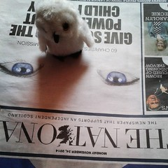 The kids' owl is reading The National, too