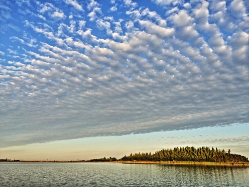 Harbour Lakes Altocumulus 20141114